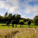 Brighton & Hove Golf Club
