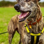 charity photographer, dogs trust, shoreham by sea photographer, animal welfare photography