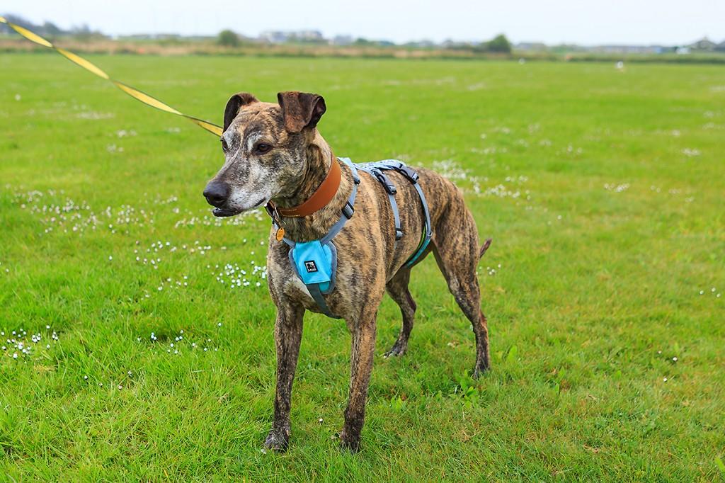 dogs trust photographer, charity photographer