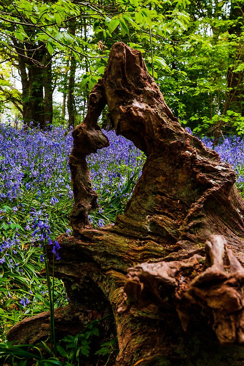 Sussex Landscape Photographer