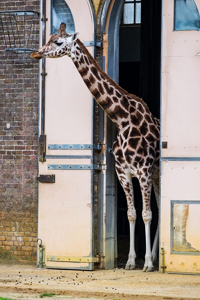 Chailey Heritage, London Zoo, Disability Photographer