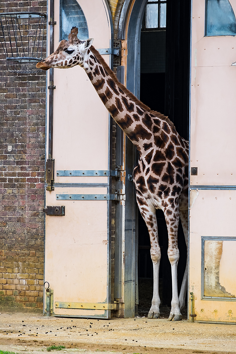 Chailey Heritage, London Zoo, Disability Photographer